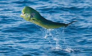 Melaque deep sea fishing