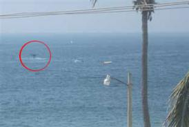 Whales from your Mexican Vacation Condo
